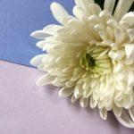 喪中の正月のあいさつはどうすべき?会社や義実家の付き合いは?